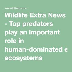 Wildlife Extra News - Top predators play an important role in human-dominated ecosystems