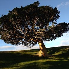 """Like a TREE I am rooted DEEPLY. I am CONNECTED to the earth. I have a PURPOSE which NURTURES me."" Photo: Jonkers Farm NZ"