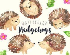 Aquarel egels Clipart | Baby bos dieren - bos Hedgehog Clip Art - Scrapbook kwekerij kunst - digitale Instant Download PNGs
