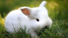 conejo blanco-animales