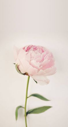 Pink peony ★ Find more vintage wallpapers for your #iPhone + #Android @prettywallpaper