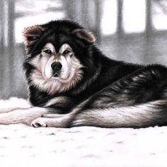 Alaskan Malamute, drawing by Nicole Zeug, www.arts-and-dogs.de