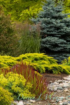 Landscaping is fantastic means of creating your garden area look picturesque. There are a number of advantages to getting a evergreen grasses landscaping design. See inspiring evergreen landscaping here. Evergreen Landscape, Evergreen Garden, Landscaping With Rocks, Backyard Landscaping, Landscaping Ideas, Backyard Privacy, Sunset Landscape, Garden Landscape Design, Garden Shrubs