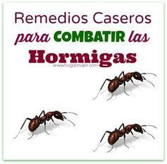 Remedios caseros para combatir las hormigas | Mama XXI