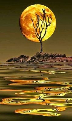 Full moon shines brightly through a lone tree on an island, making golden reflections on the water. Photography by Victor Caroli. Beautiful Moon, Beautiful World, Simply Beautiful, Shoot The Moon, Moon Pictures, Nature Pictures, Moon Photography, 5d Diamond Painting, Moon Art
