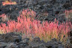 Download Il Vulcano Di Etna Pianta La Vegetazione Su Lava Nera Fotografia Stock - Immagine di