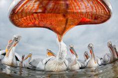 Veolia Environnement Wildlife Photographer of the Year 2011 winners.