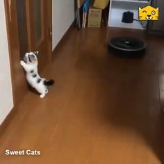 Check out this satisfying cat video - adorable kittens Funny Cute Cats, Cute Baby Cats, Cute Cat Gif, Cute Little Animals, Cute Cats And Kittens, Cute Funny Animals, Kittens Cutest, Baby Dogs, Big Cats