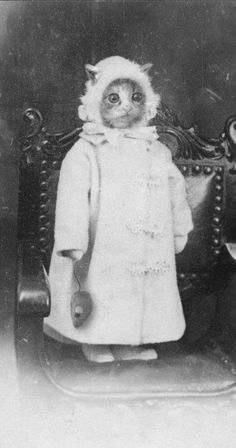 Weird Creepy Vintage Photos from the Scary Olden Days Bizarre vintage photo of cat. Proof that people have been dressing animals in costumes for ages:)Bizarre vintage photo of cat. Proof that people have been dressing animals in costumes for ages:) Crazy Cat Lady, Crazy Cats, I Love Cats, Cute Cats, Funny Cats, Funny Animals, Cute Animals, Funny Animal Faces, Weird Vintage