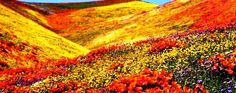 Valley of flowers...