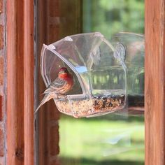 Fun Bird Feeder. Starting at $10 on Tophatter.com!