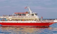 Groupon - Dolphin-Watching Tour or Whale-and-Dolphin-Watching Tour for 1 or 2 from Cape May Whale Watcher (Up to 52% Off) in Lower. Groupon deal price: $15