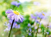 단월드 명상>브레인 휴休 명상 - 대한민국 두뇌포털 브레인월드