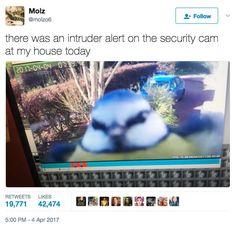 99 Very Important Animal Tweets Of 2017 (So Far)