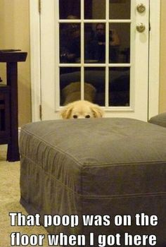 Dog behind ottoman poop was already here Funny dog photo with captions