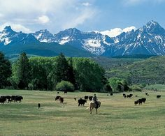 """Ranch Manager  Tom Harrington on a cattle drive. """"There's such a sense of space at the ranch,"""" says Ralph Lauren. """"Whether Ricky and I are riding horses or driving, we're at ease, surrounded by the mountains. It's completely restful and inspiring."""""""