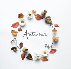 Image about text in Fall (the best season ever)🍁 by Damaris🌞 Julia Smith, Autumn Cozy, Autumn Fall, Autumn Photography, Autumn Aesthetic Photography, Seasons Of The Year, Happy Fall Y'all, Arte Floral, Hello Autumn