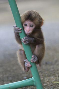 Awaji Monkey Center...By: Masashi Mochida