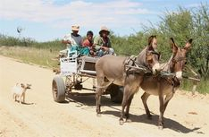 Donkey cart Namibia Farm Animals, Animals And Pets, Cute Animals, Country Art, Landscape Paintings, Landscapes, Donkey, Flower Art, South Africa