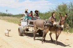 Donkey cart Namibia