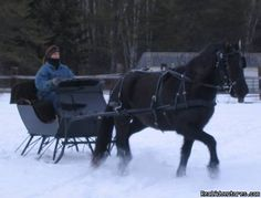 horse drawn sled images | One Horse Open Sleigh with Beautiful Bella: Horse Drawn Sleigh Rides ...