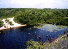 Algodoal, Pará