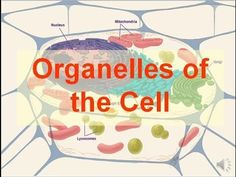 Cells Cells - Parts of the Cell Rap - YouTube