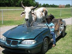 #FreakyFriday: Cow learns to ride! Countryside! #Amritfood http://www.amritfood.com/  pic.twitter.com/QxHJo1nKtL