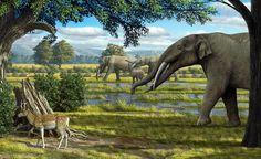 Miocene - Mauricio Antón