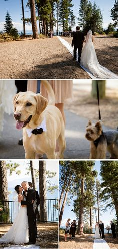 Lake Tahoe wedding dogs...ahhh.