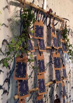 These botanical hangtags are displayed on birch wood that is decorated with ivy.