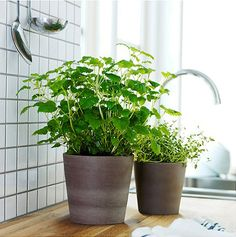 De style traditionnel et de couleur neutre, les cache-pots MANDEL permettent au vert de vos plantes de briller.