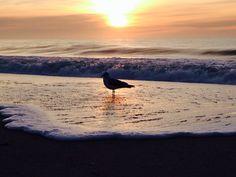 Sunrise gull charlestown beach another beautiful day