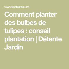 Comment planter des bulbes de tulipes : conseil plantation | Détente Jardin