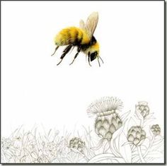 The Great Yellow Bumble Bee and the Machair. (a Bee for Esme) Bee Pictures, Bee Pics, Buzzy Bee, Bee Art, Insect Art, Bee Happy, Bees Knees, Bee Keeping, I Love Bees
