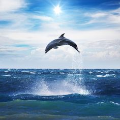 Victory! Brutal Dolphin Hunt Dealt Massive Blow / This could be the beginning of the end of the world's largest dolphin hunt, which claims the lives of thousands of animals each year. #EndTaijiKilling #CoveGuardians #tweet4taiji