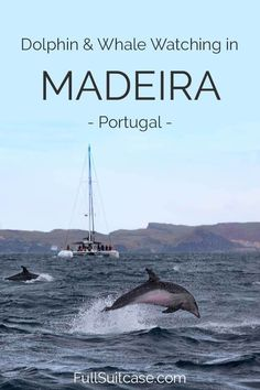 Complete guide to dolphin and whale watching in Madeira. Best time to go, what to expect, and which tour or boat to take. #whalewatching #madeira #funchal #portugal