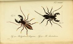 https://www.flickr.com/photos/biodivlibrary/8560516414/sizes/l