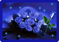 Rosas azules expectaculares