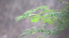 "Photo ""Rain2"" by Scorpio-Mystique"