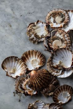 Scallops with Breadcrumbs, Butter & Thyme - From My Dining Table by Skye McAlpine