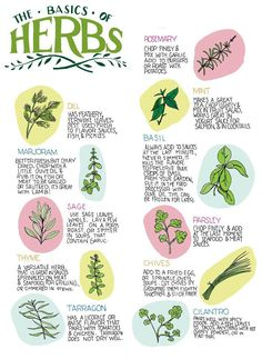 Herbs and spices to include in a paleo diet Magic Herbs, Herbal Magic, Healing Herbs, Medicinal Plants, Aromatic Herbs, Witch Herbs, Kitchen Witch, Herbal Medicine, Herb Garden