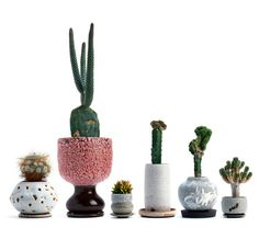 Collaboration between a Japanese plant whisperer we had never heard of, named Kohei Oda, and a longtime Sight Unseen favorite, the ceramicist Adam Silverman. Together they had made a series of potted cacti that were amazing in their complete and total eccentricity