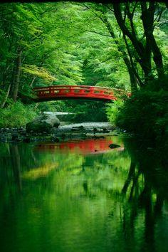 Shizuoka, Japan #緑 #Green