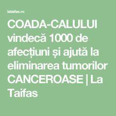 COADA-CALULUI vindecă 1000 de afecțiuni și ajută la eliminarea tumorilor CANCEROASE | La Taifas