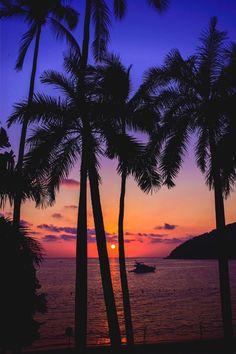 Acapulco Sunset Palm Tree Sky Trees Hawaiian Beach