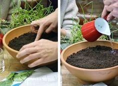 Plantar semillas en macetas