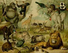 1897 Antique lithograph of AFRICAN FAUNA by TheOldPrintsCabinet, $24.50