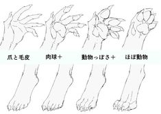 Reference animal anatomy