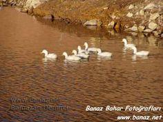 banaz_bahar33